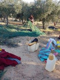 Olivenpflückerinnen3Netz - Kopie