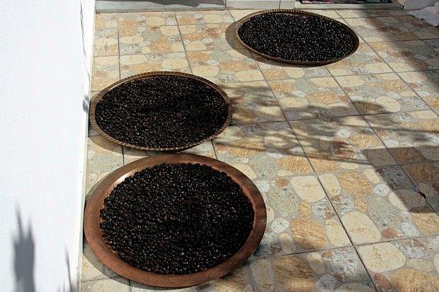 Oliventrocknen